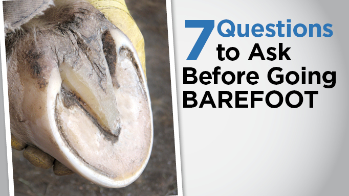 Thumbnail for 7 Questions to Ask Before Transitioning Your Horse to Barefoot