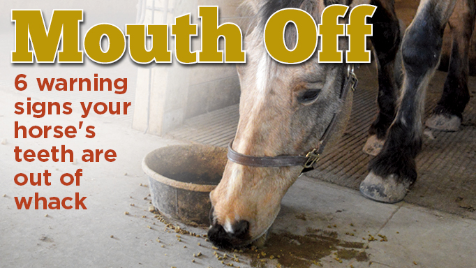 Thumbnail for 6 Warning Signs Your Horse Needs Dental Work
