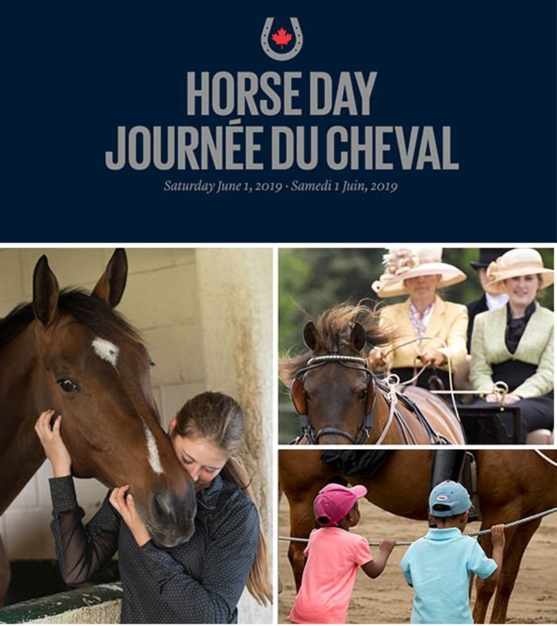 Thumbnail for What Are Your Plans for 2019 National Horse Day?