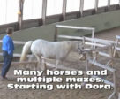 Winnie's got a new challenge for the horses at Winsong Farm - mazes!