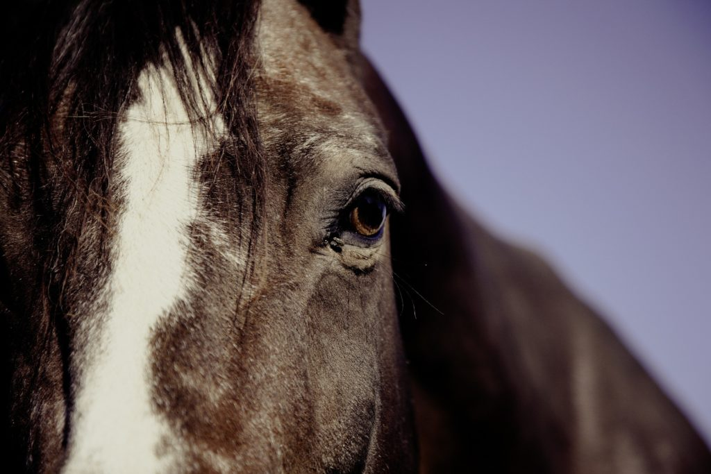 The Ontario Government has released a public survey and introduced a new temporary regulation in an effort to improve the animal welfare system.
