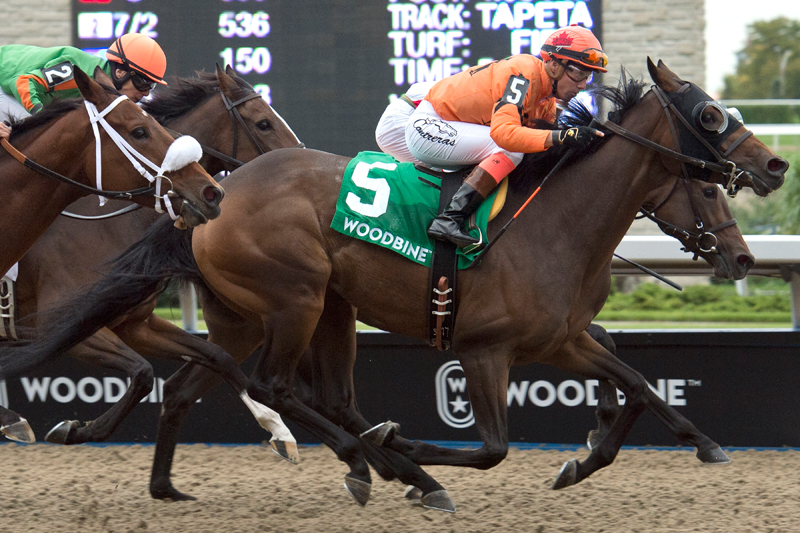 Bear Paw (#5) winning the 2018 Classy 'n Smart Stakes at Woodbine Racetrack. Michael Burns Photo