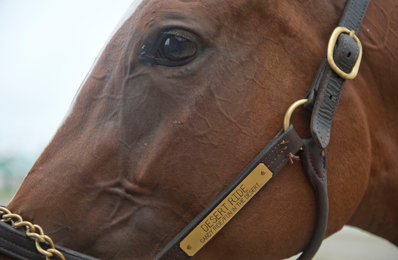 Desert Ride has her eye on a Queen's Plate victory. Michael Burns Photo