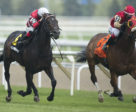 Emmaus (#6), runner-up to El Tormenta in the Grade 2 Connaught Cup on June 1 at Woodbine Racetrack