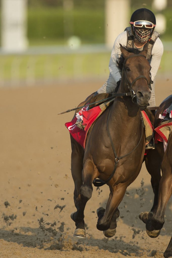 Queen's Plate contender Federal Law breezes under exercise rider Cassie Garcia at Woodbine Racetrack. Michael Burns Photo