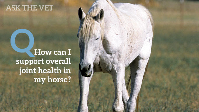 Thumbnail for How to Preserve Your Horse's Joint Health and Mobility