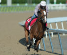 Queen's Plate contender Skywire at Woodbine. Michael Burns Photo