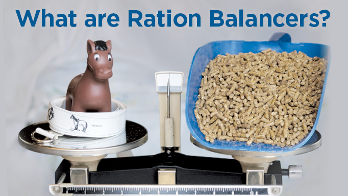 Thumbnail for What are Ration Balancers and Do I Need to Feed Them to My Horse?