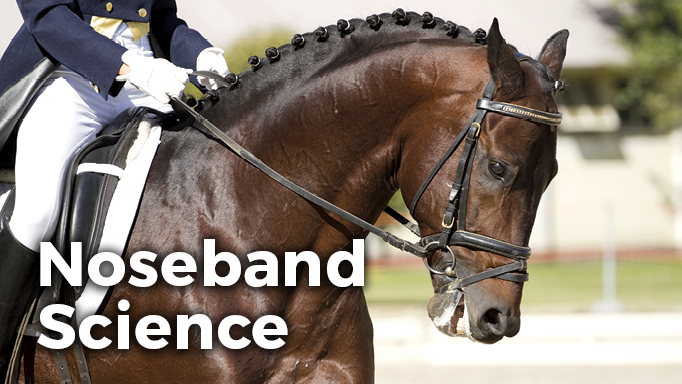 Thumbnail for Noseband Science: How Tight is Too Tight for Your Horse?