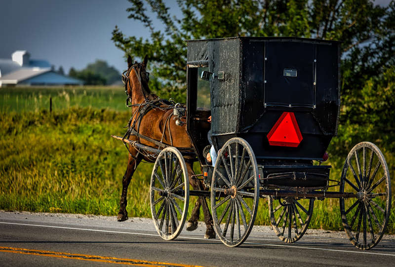 Thumbnail for Horse-Drawn Cart Accidents in PEI Prompt Road Safety Review