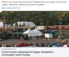 A total of six chuckwagon horses died during this year's Calgary Stampede.