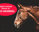 A new toll-free number is available 24/7 to report animal welfare concerns: 1-833-9ANIMAL.