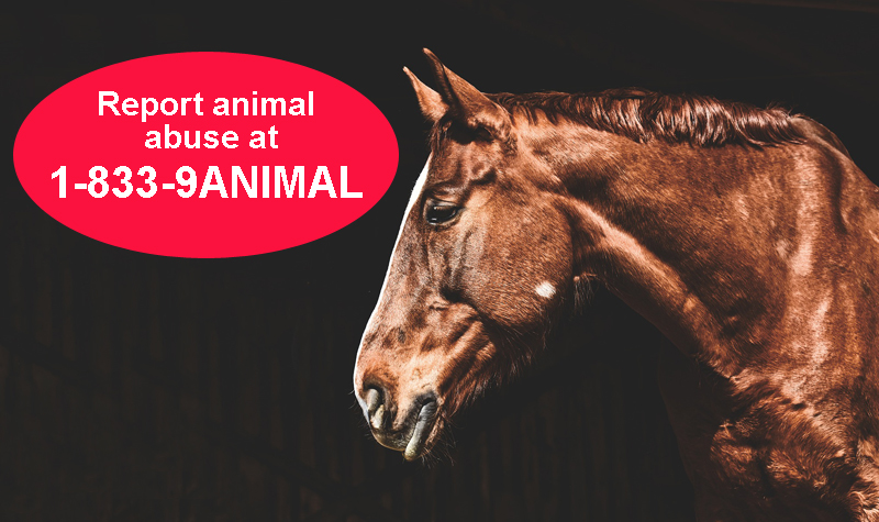 Thumbnail for Ontario Has a New Toll-Free Hotline to Report Animal Abuse