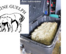 Results are in from the Equine Guelph funded research investigating steamed, soaked and dry hay in Ontario.