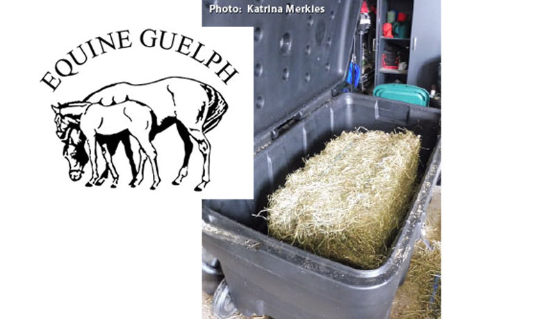 Thumbnail for Ontario Study Shows Steamed Hay is Superior for Equine Athletes