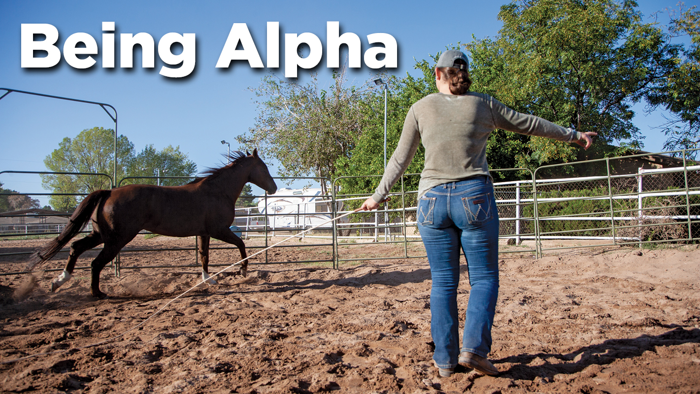 Thumbnail for Exploring the Dominance Theory In Horse Training
