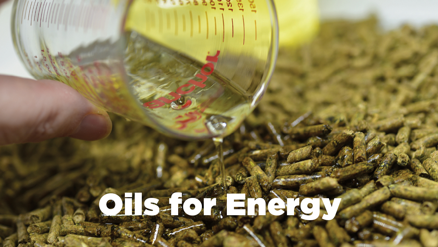 Thumbnail for Feeding Horses Oils for Added Energy without Excitability