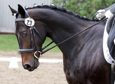 Lucky Merv was intended to be ridden as a western reiner by Jennifer's husband, but instead he's become an impressive dressage mount.