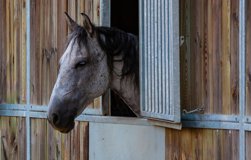 A group of researchers from Australia recently conducted a study to investigate human interactions with horses, looking at tradition vs science.