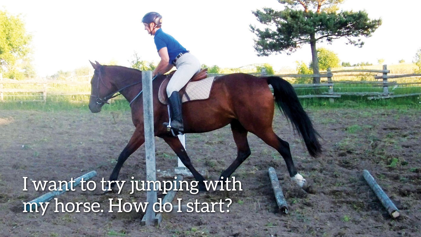 Thumbnail for A Beginner's Guide to Teaching a Horse How to Jump