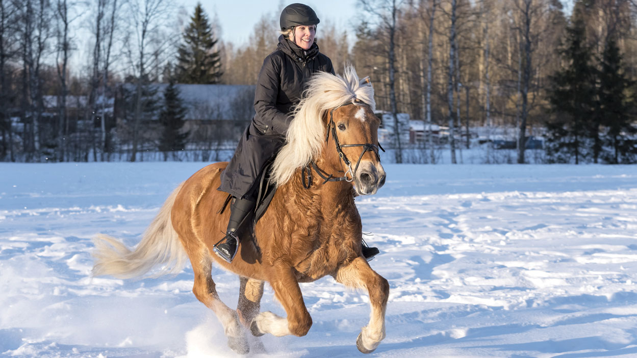 Thumbnail for How Cold is Too Cold To Ride Your Horse in the Winter?