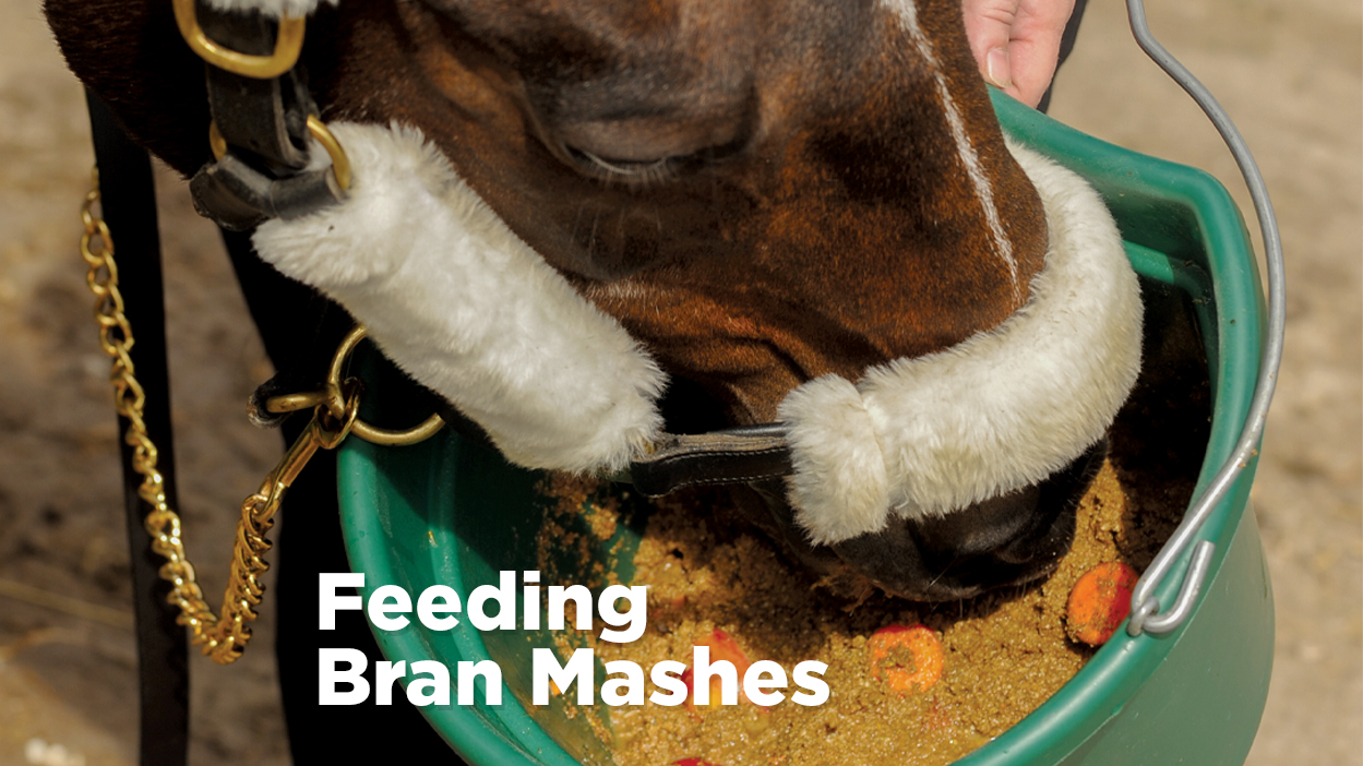 Thumbnail for The Dos and Don'ts of Feeding Horses Bran Mash