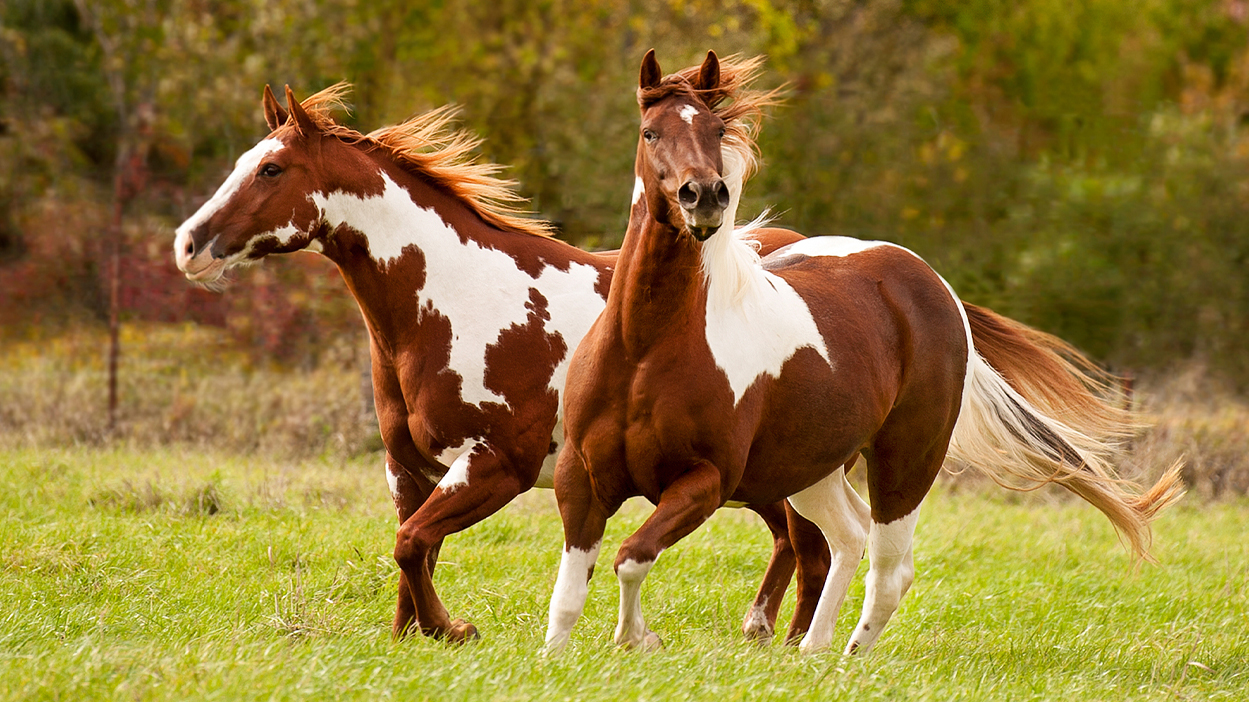 Thumbnail for 10 Amazing Facts About Equine Genetics and Coat Colours