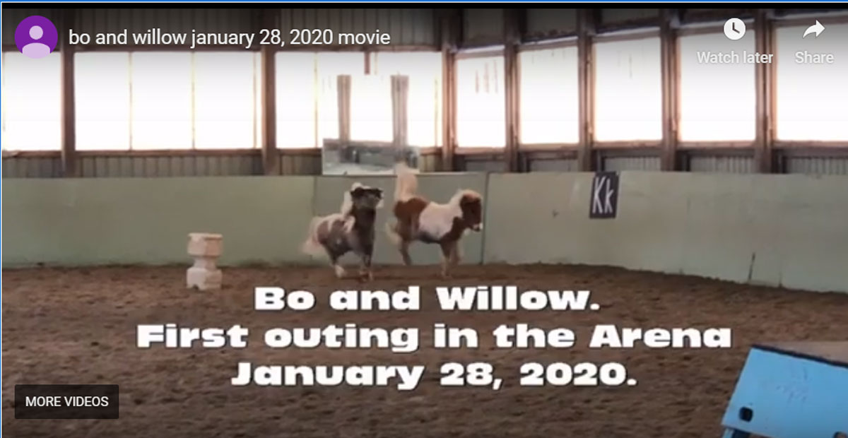 Thumbnail for Introducing Bo and Willow
