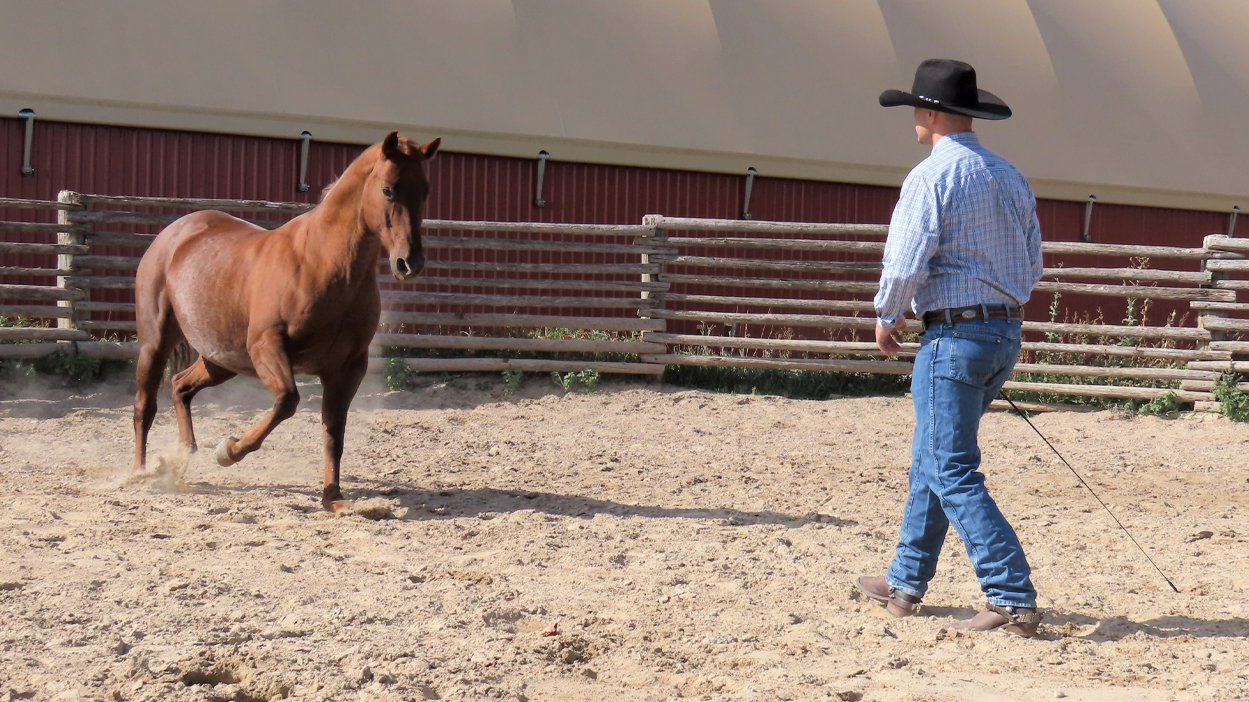 Thumbnail for How to Teach your Horse to Come to you When you Call