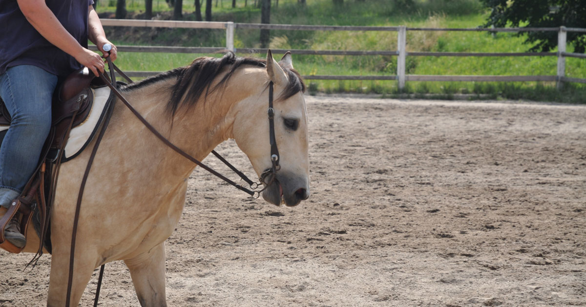 Animal welfare expert discusses bits and breathing in horses