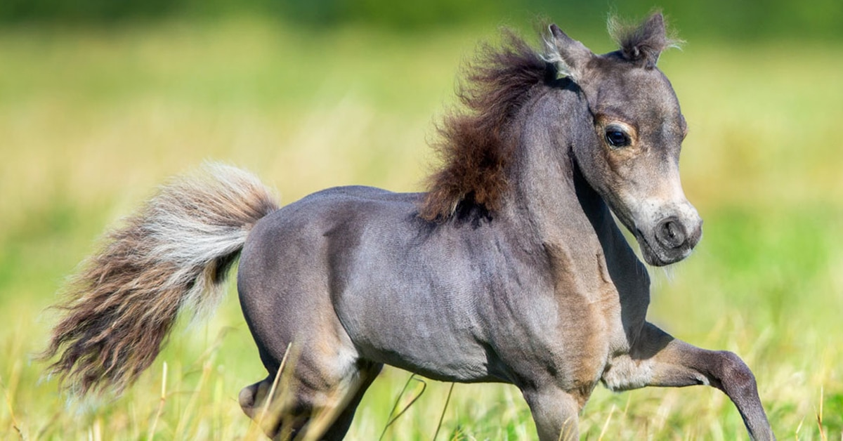 Thumbnail for Researchers find a better way to treat foal pneumonia