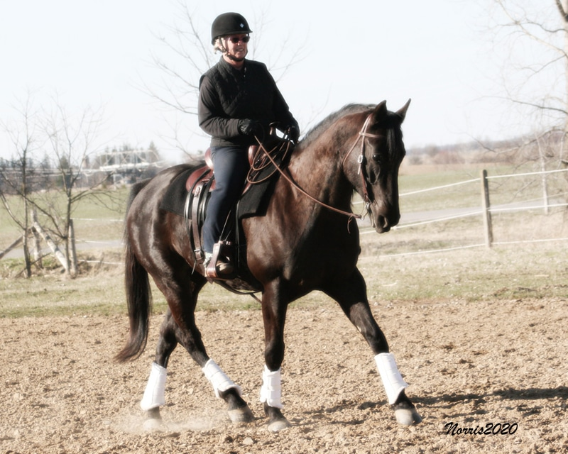 You can participate in Western Dressage with any breed of horse.