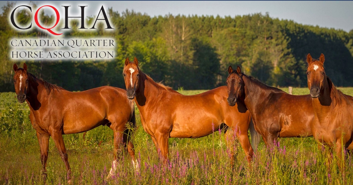 Thumbnail for CQHA to Recognize Heroes Within the Quarter Horse Community