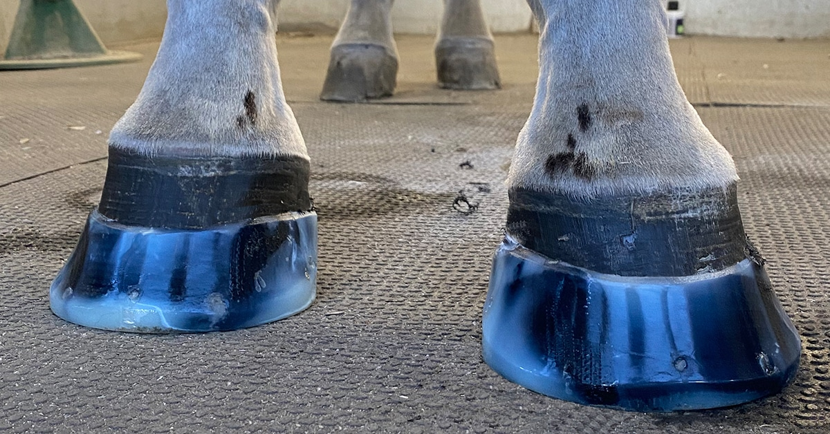 Thumbnail for Revolutionary New Mold System Addresses Hoof Problems