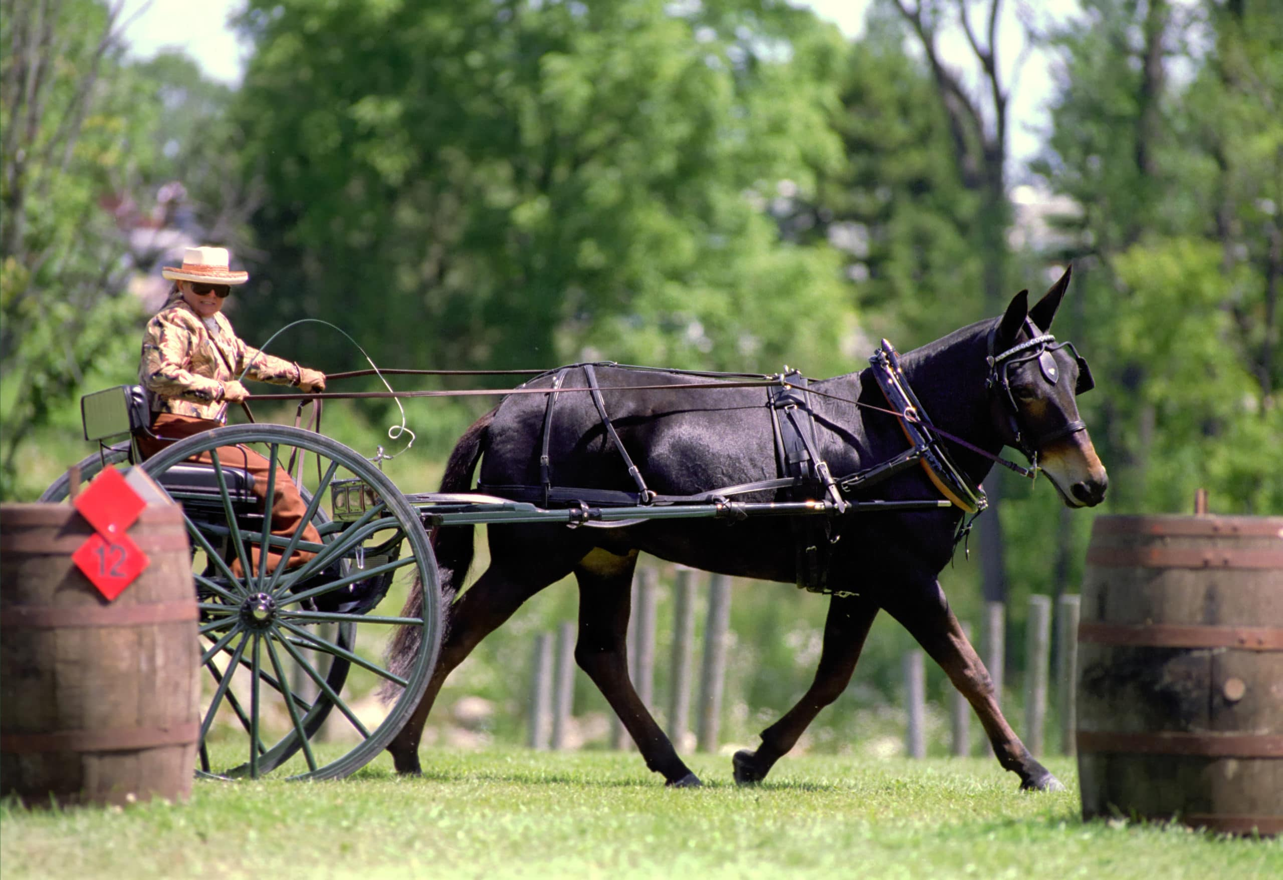 Thumbnail for John Henry at the 2000 Carriage Classic