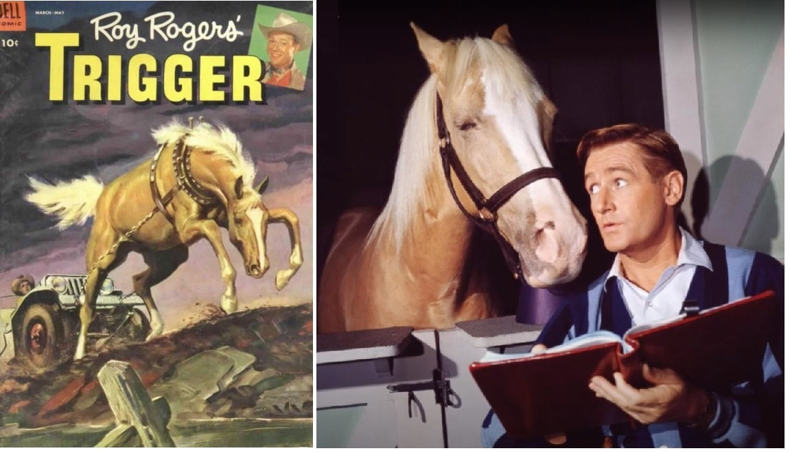 famous Palomino horses; Trigger and Mr Ed
