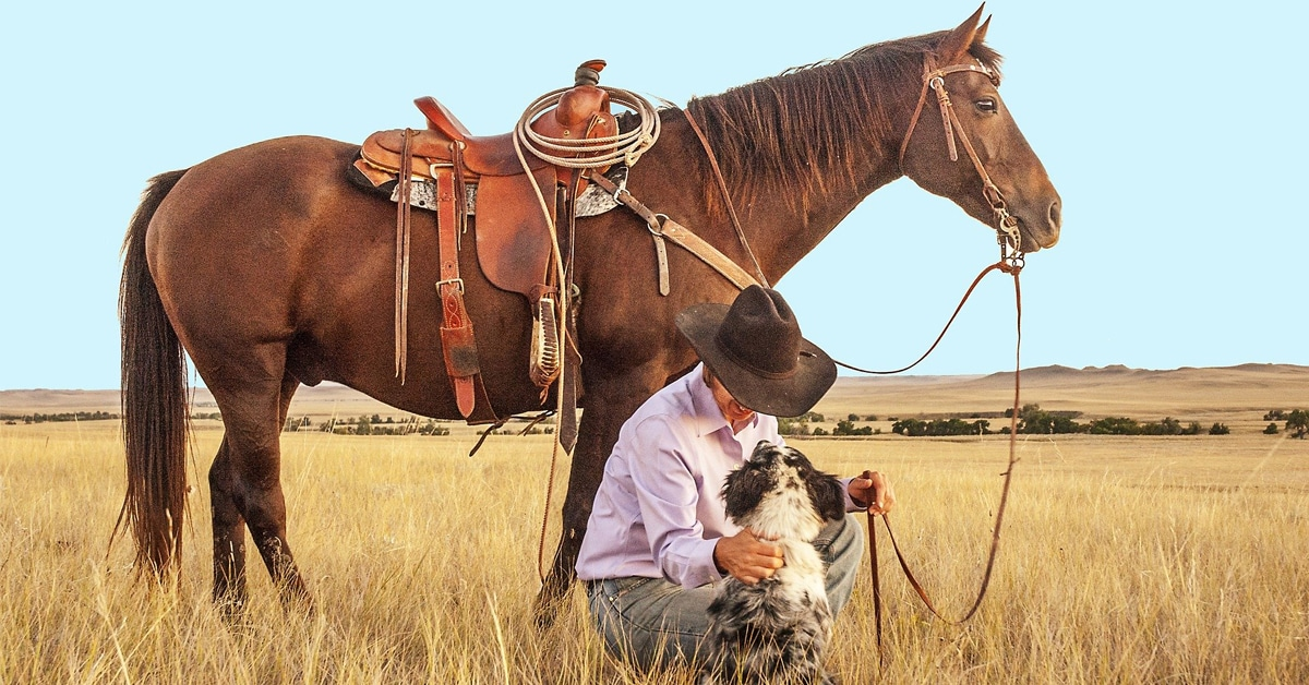 Thumbnail for dog-horse-nutrition