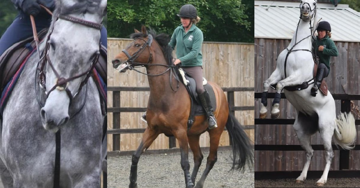 Thumbnail for 24 Ways To Tell if Your Horse is in Pain Under Saddle