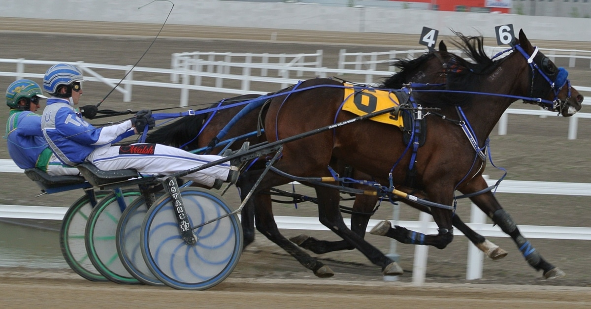 Thumbnail for standardbred-web