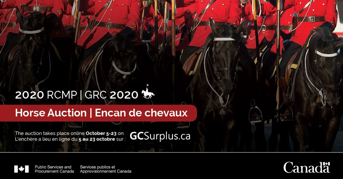 Thumbnail for Popular RCMP Horse Auction Goes Virtual for 2020