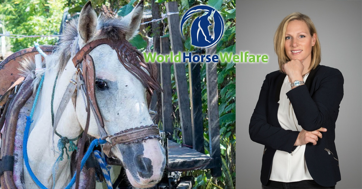 Thumbnail for Royal Family Gives Back to Horses in Need Worldwide