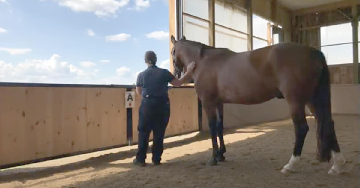 Thumbnail for Practical Nutrition Tips in New Equine Guelph Video