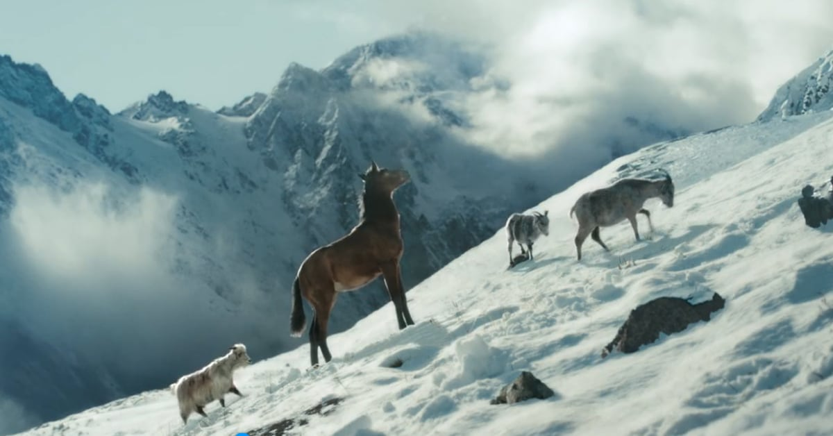 Thumbnail for Raised By Goats: New Bronco Ad Features Animal Stars