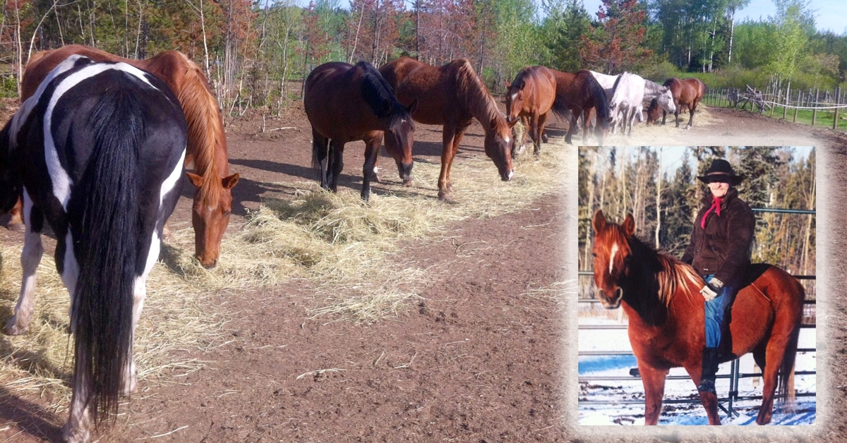 Thumbnail for Community, Friends Rally to Help BC Man and His Horses