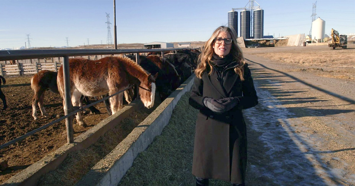 Thumbnail for Flight Animals: W5 Airs Episode on Canada's Horse Meat Trade
