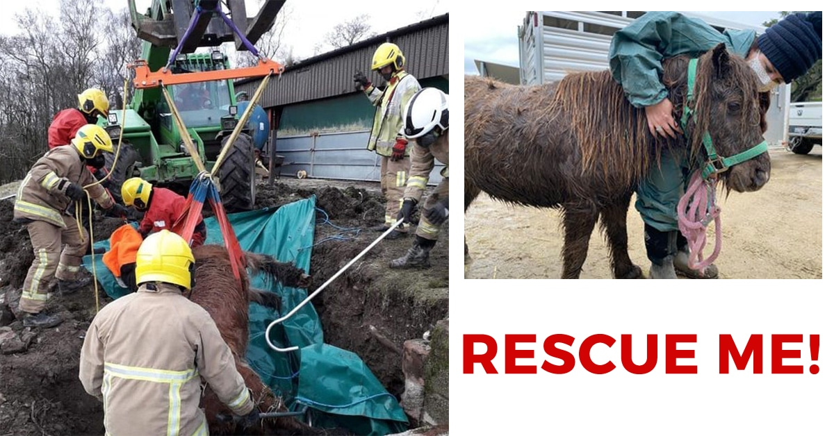 Thumbnail for Rescue Me: First Responders Save Horses in Peril