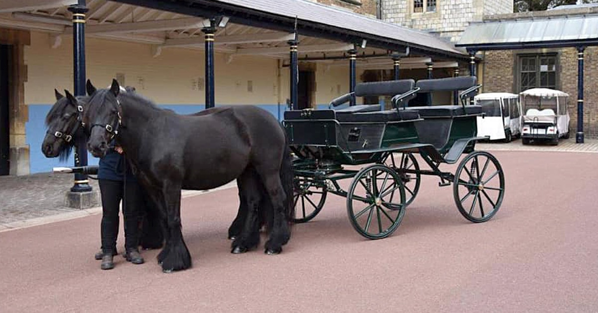 Thumbnail for Royal Teen to Inherit Prince Philip's Carriage and Ponies