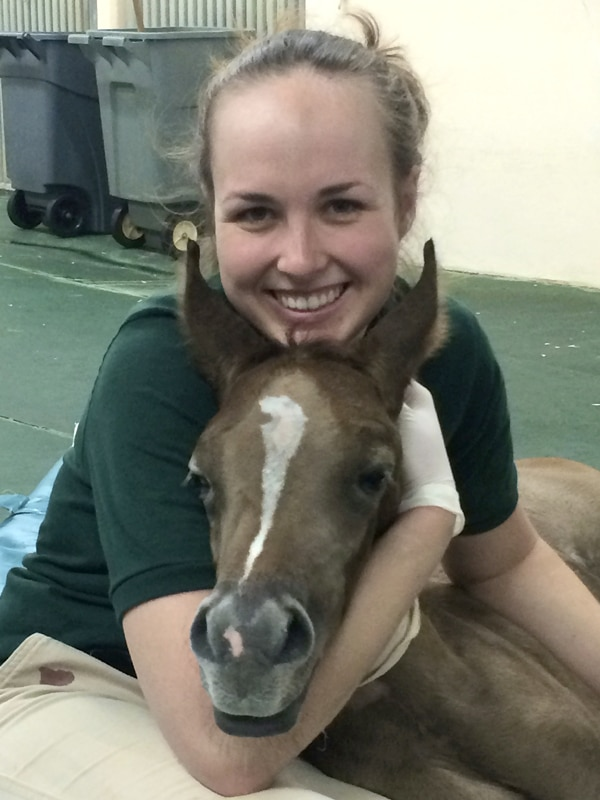 Thumbnail for Dr. Kopper with foal