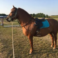 BROWSE CLASSIFIEDS - Horse CanadaHorse Canada