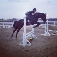 16.3hh Gelding FOR SALE